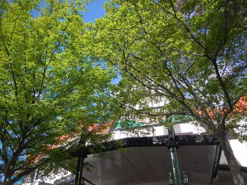 新緑の季節到来