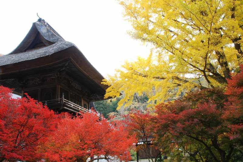 紅葉の名所「霊松寺」秋の内部拝観付宿泊プラン