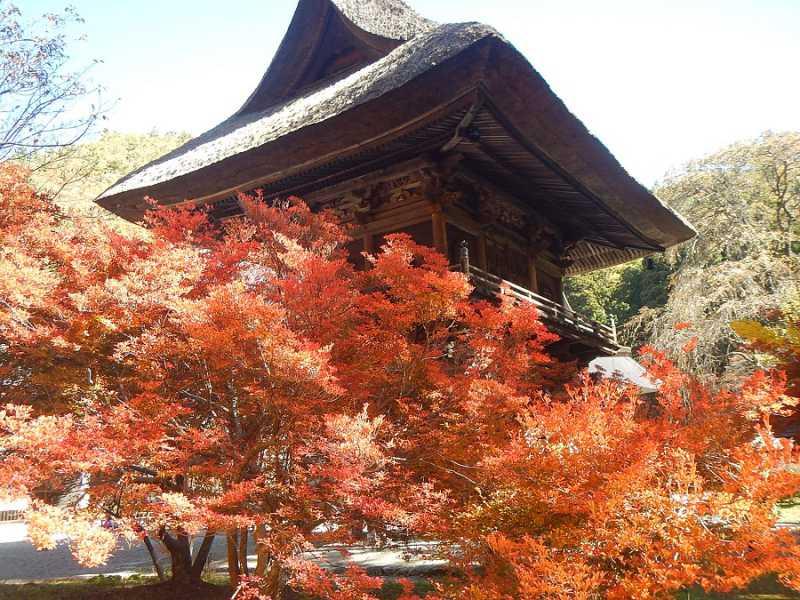 霊松寺、高瀬渓谷の紅葉が見頃になってきました。