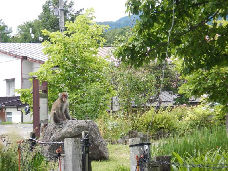 猿の散歩と食事 黒部観光ホテルの正面庭