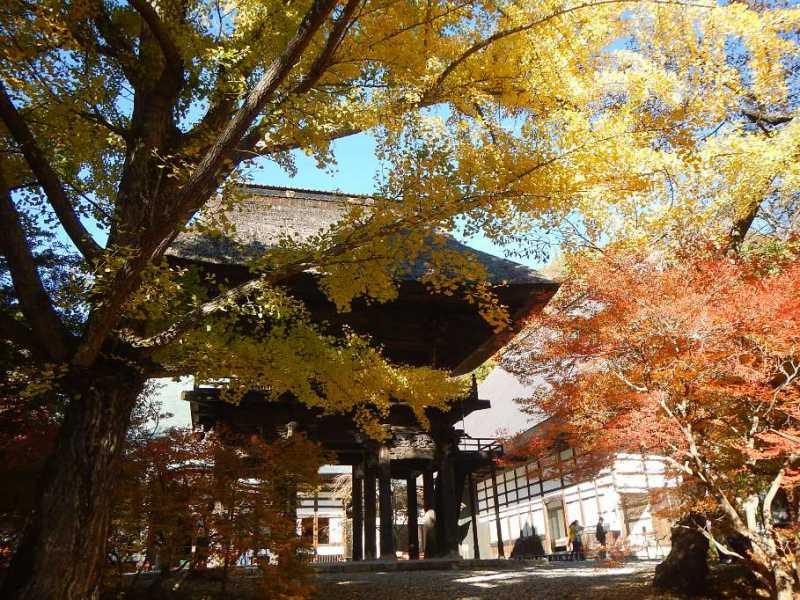 霊松寺ライトアップ