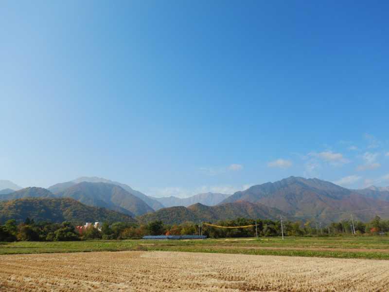稲刈りも終わり、大町温泉郷付近まで紅葉がおりてきています。