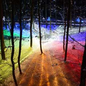 The pageant of the light forest